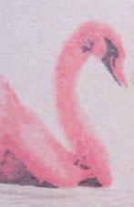 snk-pek-forever-swans