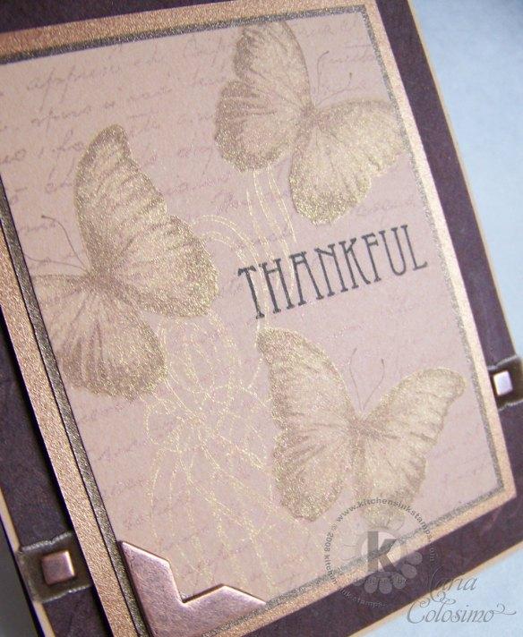 Thankful-Butterflies-close-up