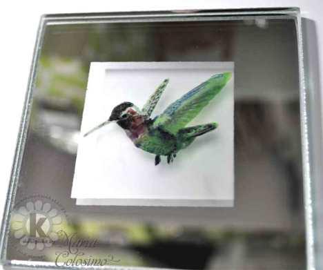KSS-Humming-Bird-close-up
