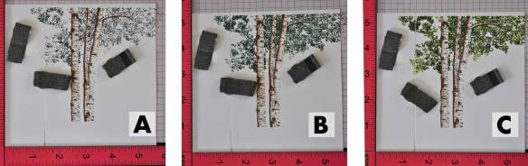 birch-tree-leaves