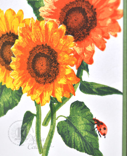 3-Giant-Sunflowers-clsp